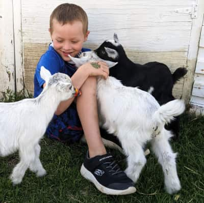 Young boy cuddles with baby goats